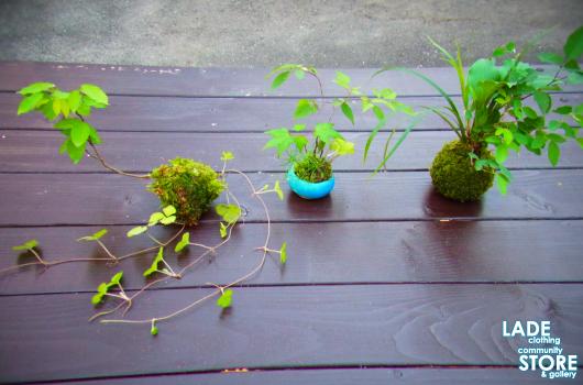 那須苔屋盆栽教室