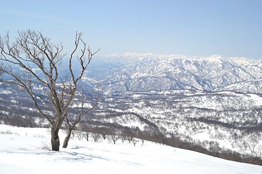 山形 スノーボードツアー